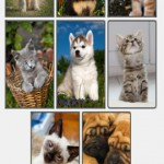Cute kittens and puppies puzzles - Deluxe
